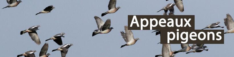 Appeaux pigeons