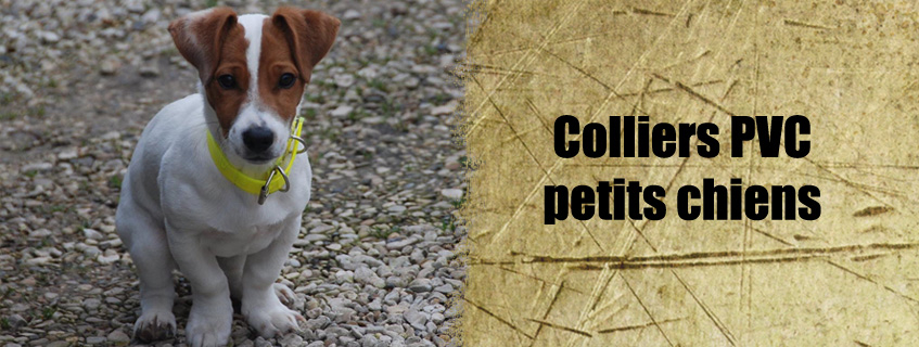 Colliers PVC petits chiens