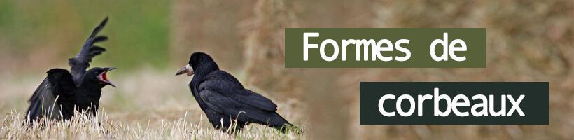 Appelants corbeaux
