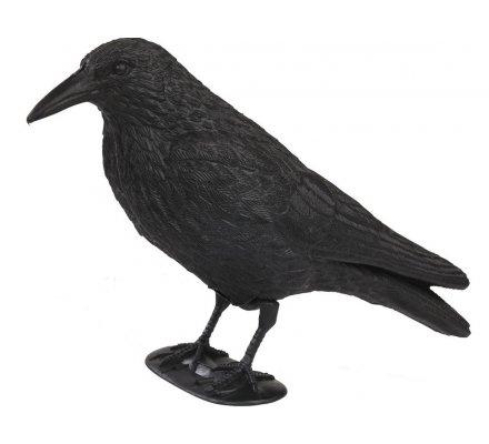 Appelant corbeau avec pattes