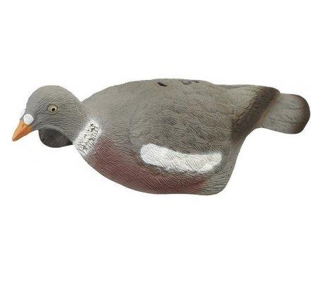Appelant pigeon coquille (creux)