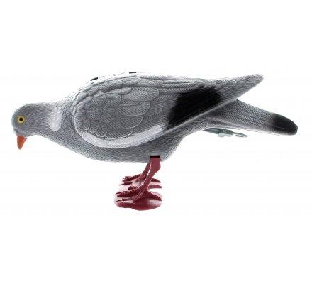 Appelant pigeon floqué avec pattes qui picore