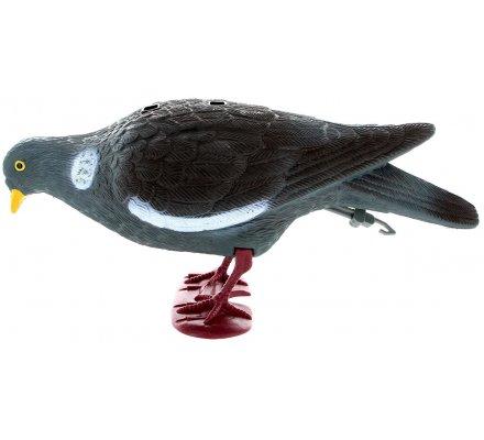 Appelant pigeon avec pattes qui picore