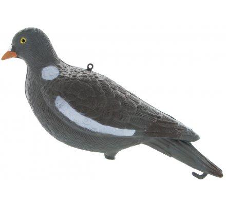 Appelant pigeon ramier sans pattes
