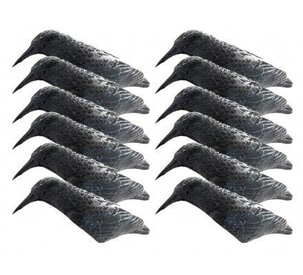 Pack 12 appelants corbeaux coquilles