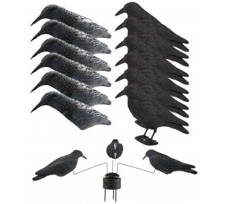 Pack first 12 appelants et manège à corbeaux