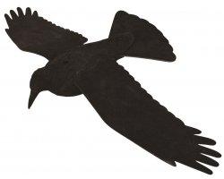 Corbeau à ailes déployées EVA