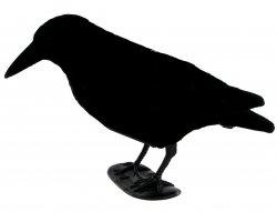 Appelant corbeau floqué qui croasse