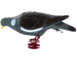 Appelant pigeon ramier avec pattes qui picore