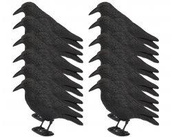 Pack 12 appelants corbeaux avec pattes