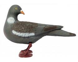 Pigeon ramier avec pattes tête tournée