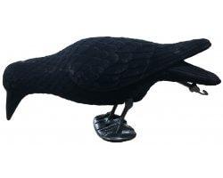 Appelant corbeau mangeur floqué avec pattes