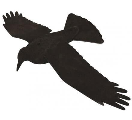 Appelant corbeau à ailes déployées EVA