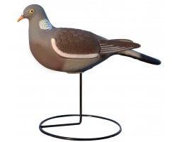 Appelant pigeon droit HD