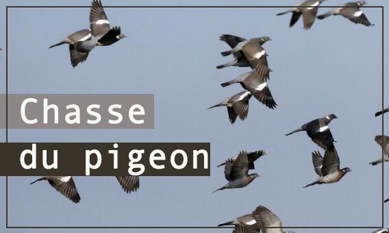 Sélection accessoires pigeon